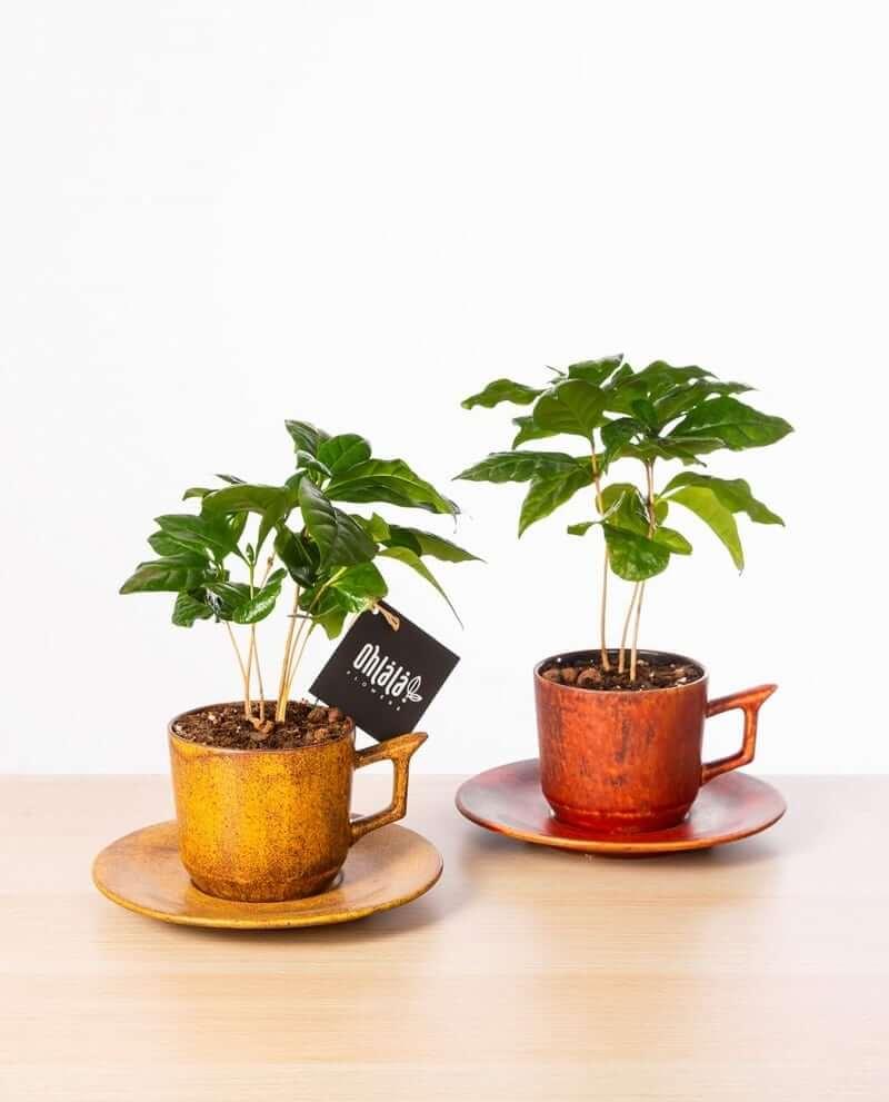 Coffeemania-double-01
