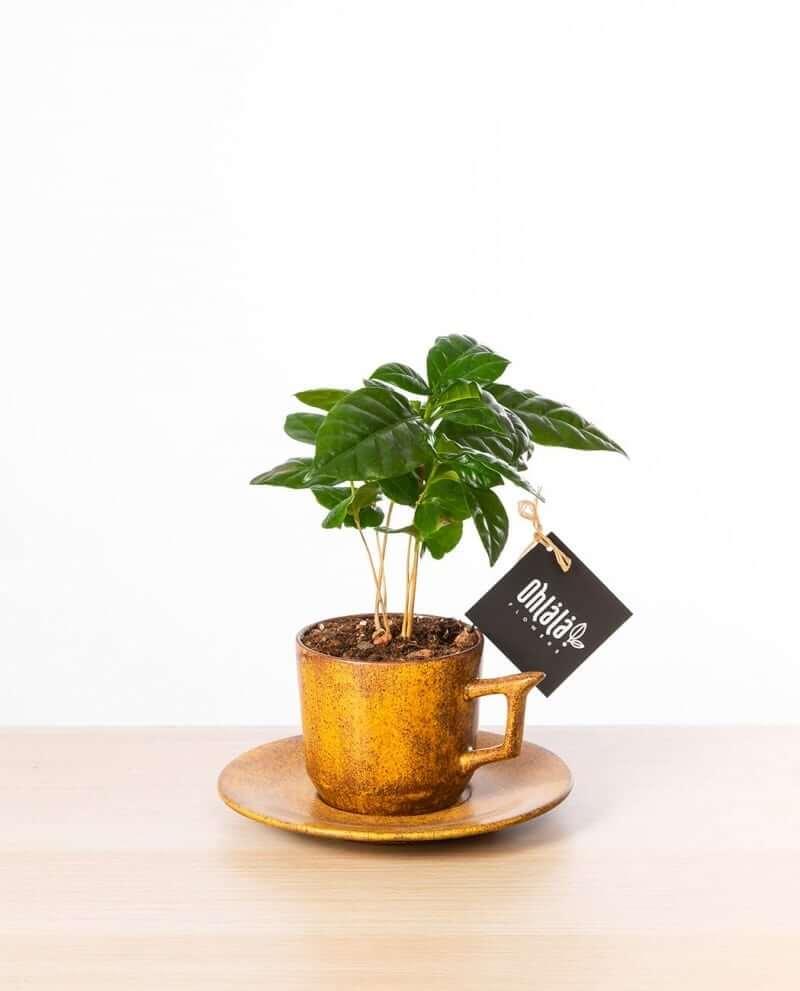 Coffeemania-single-01