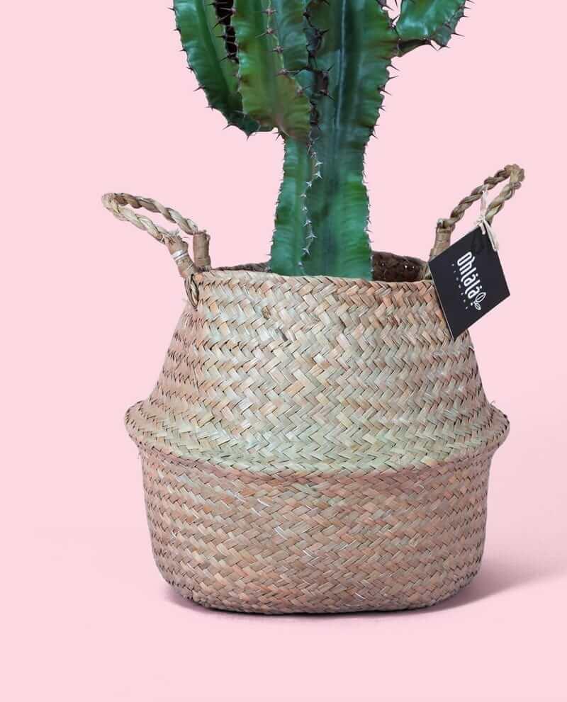 Euphorbia-khs-02