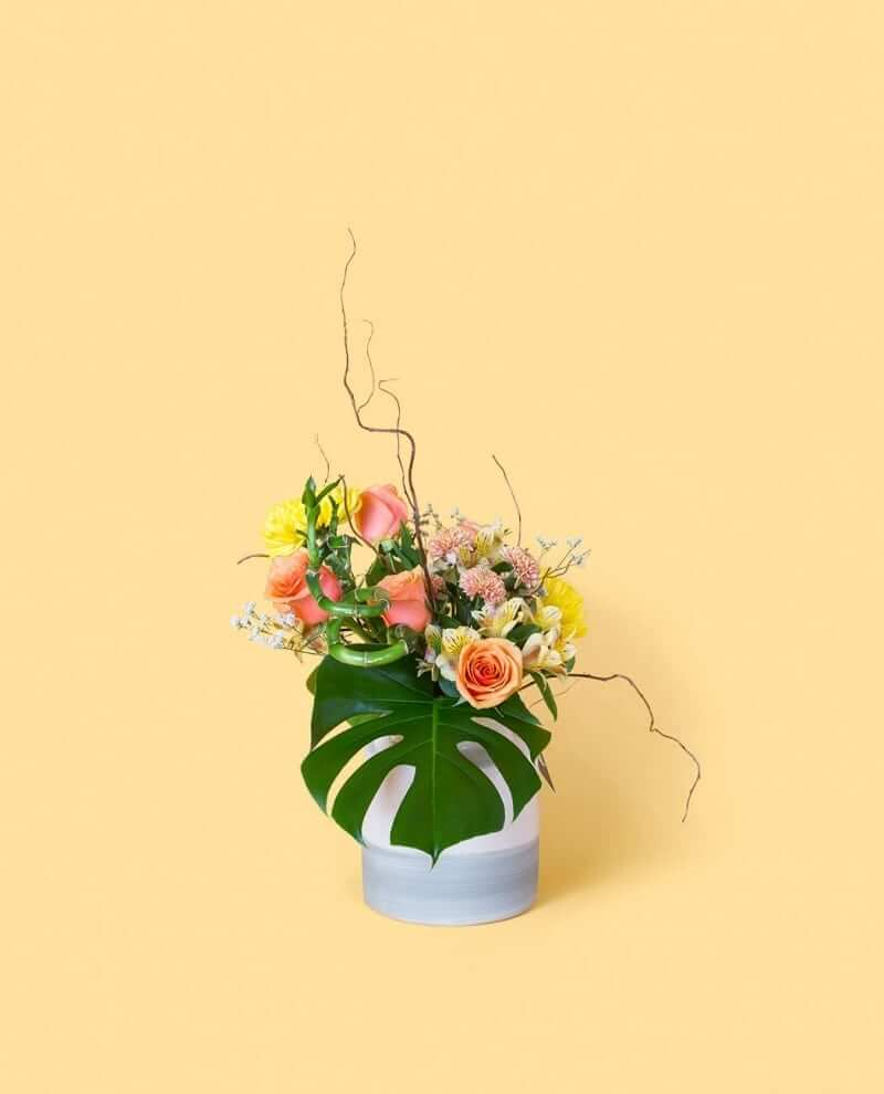 Tropicale_sv_o02