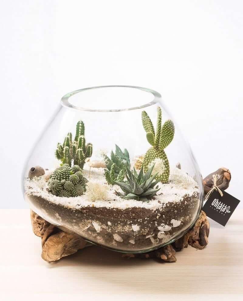 kaktus-terrarium-b-01