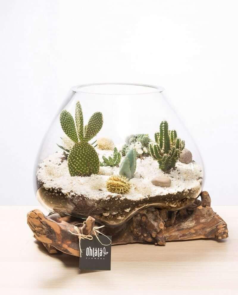 kaktus-terrarium-b-02
