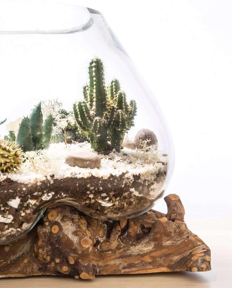 kaktus-terrarium-b-03