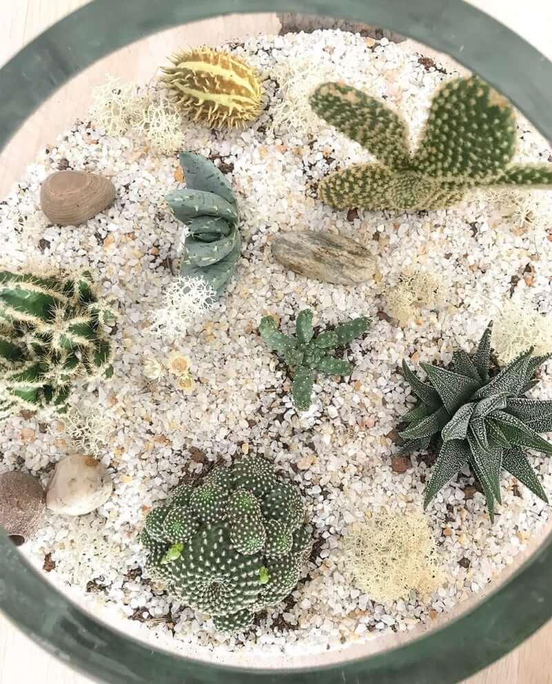 kaktus-terrarium-b-04