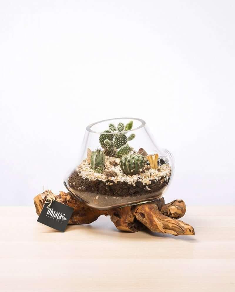kaktus-terrarium-k-01