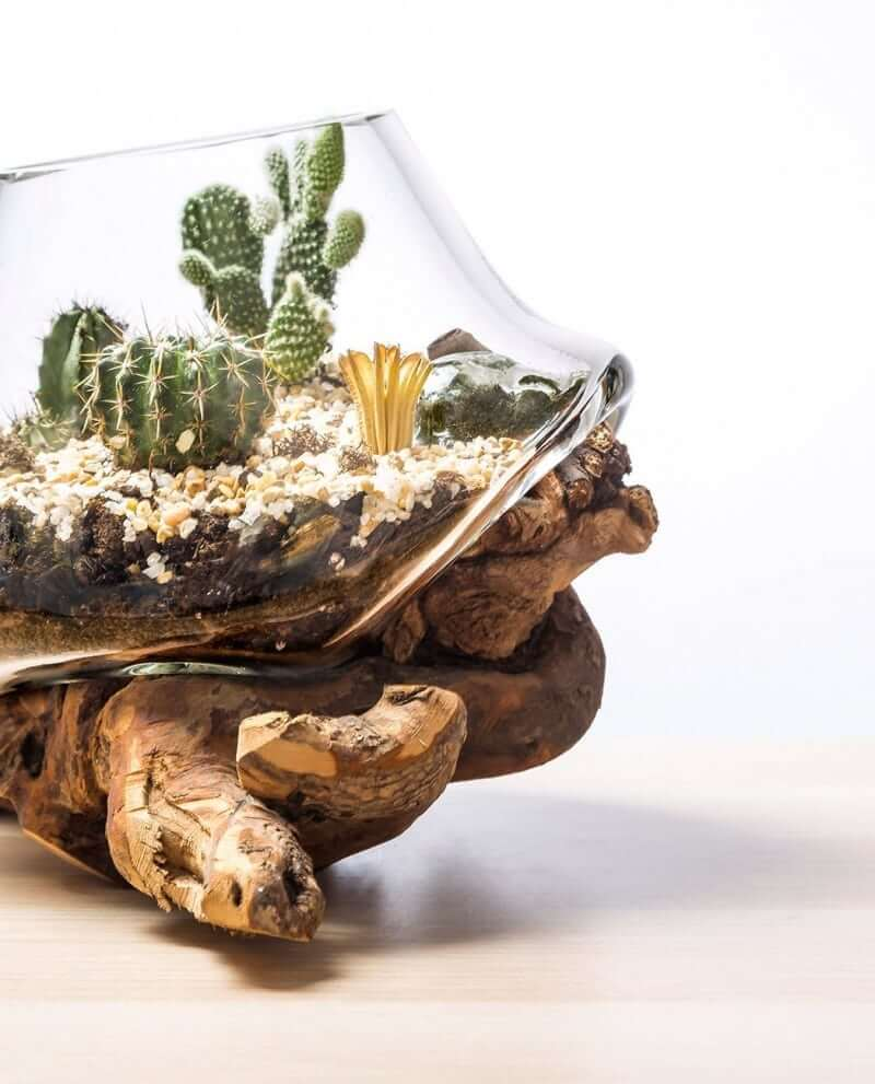 kaktus-terrarium-k-03