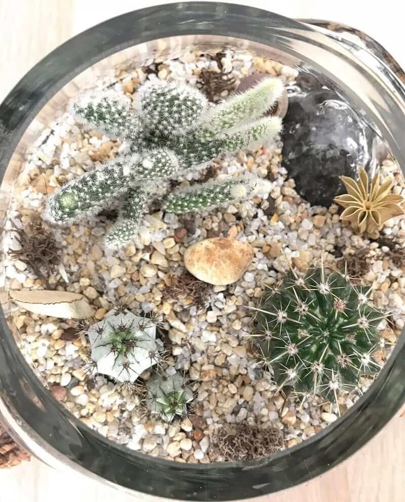 kaktus-terrarium-k-04