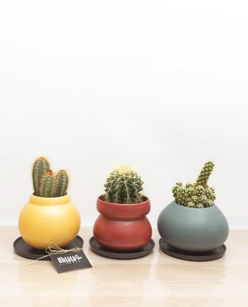 jazz-trio-cactus-010