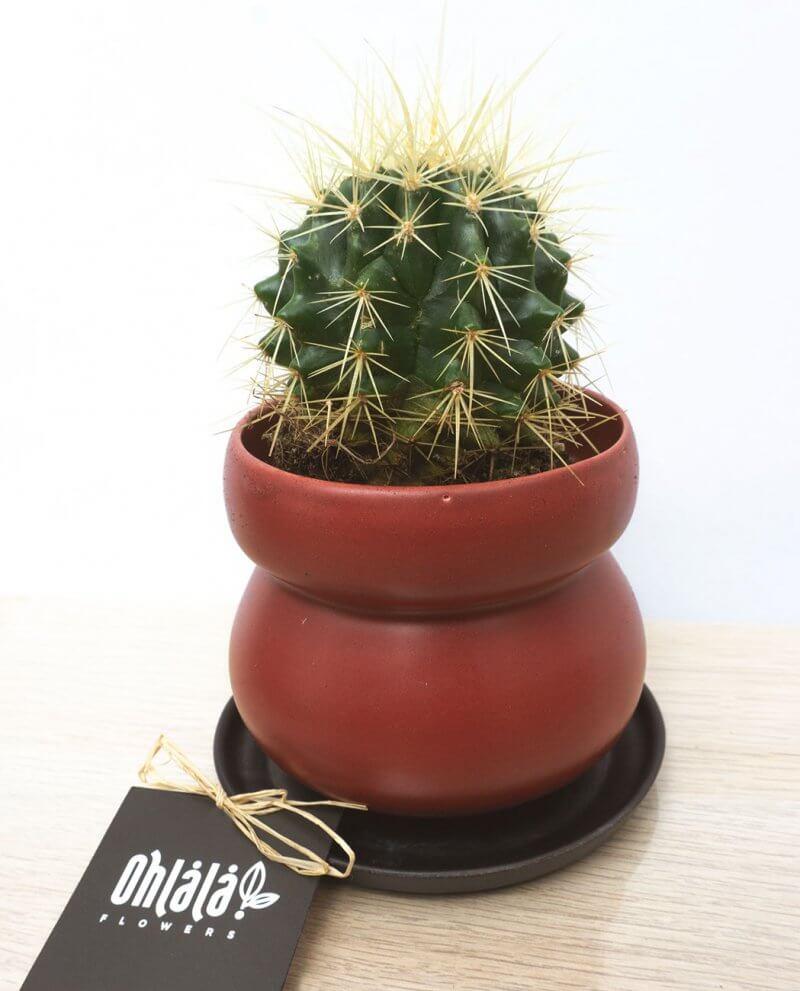 jazz-trio-cactus-02