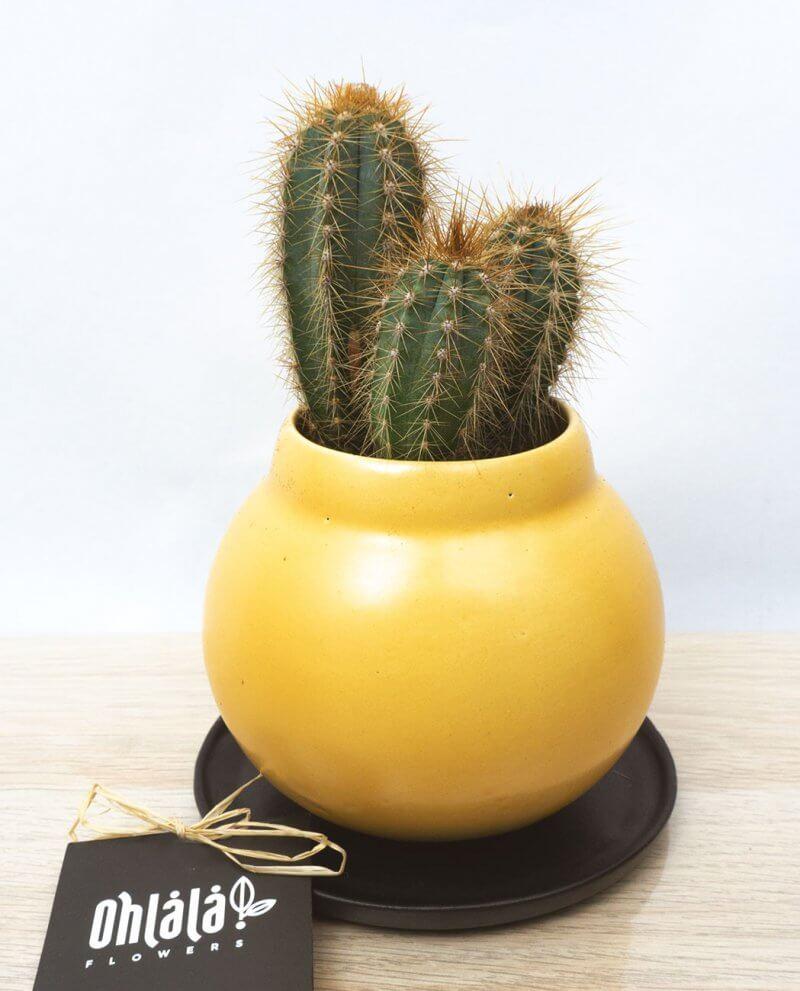 jazz-trio-cactus-04