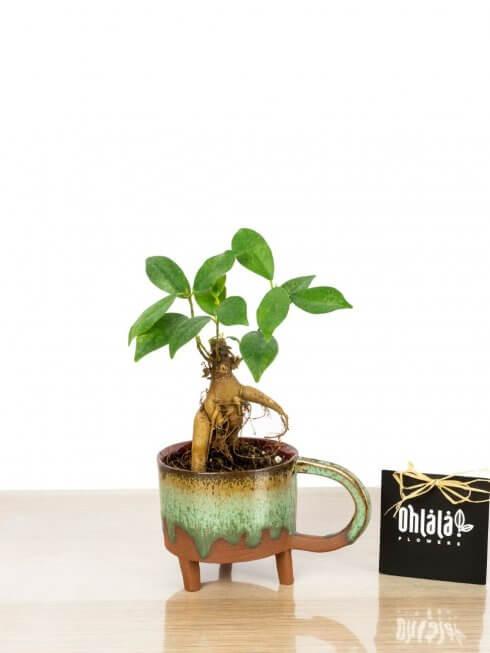 minyatür bonsai el yapımı seramikte