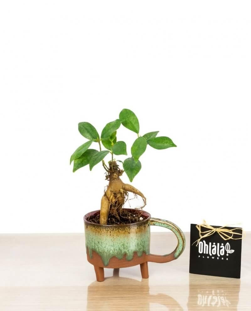anny-bonsai-01