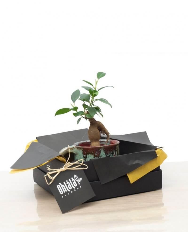 anny-bonsai