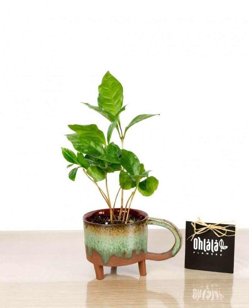 anny-kahve-01